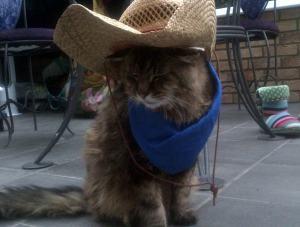 My dear little cat